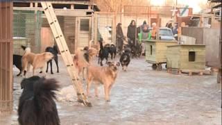 В приюте для бездомных животных «Ильинка» не хватает рабочих рук