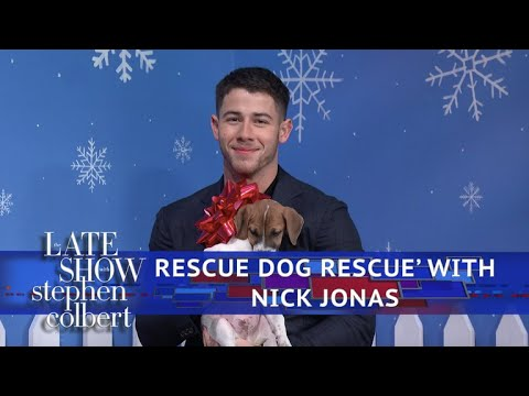 The Late  'Rescue Dog Rescue' With Nick Jonas