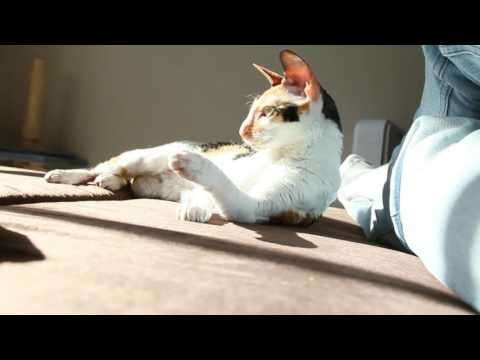Funny cat cornish rex