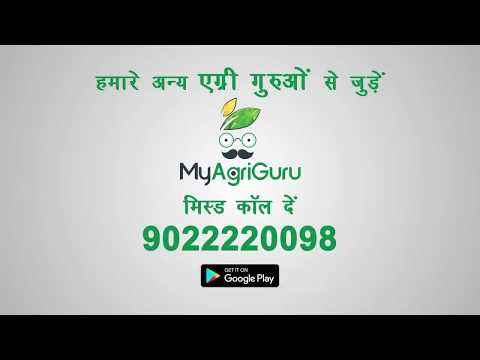 AgriGurus of India | Four Layered  Cropping to Boost Productivity!