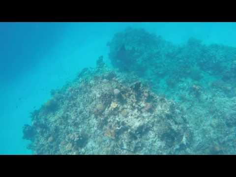 Eagle Rays, Montego Bay, Jamaica