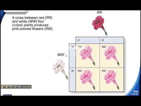 genetics: complex patterns of inheritance video