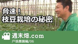 枝豆 育て方の秘密-戸張農園 thumbnail