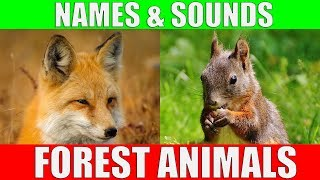 Forest Animals Video for Kids - Children Learn Forest Animal Sounds and Names | Kiddopedia