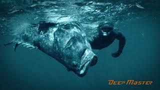 Мадагаскар. Подводная Охота. Взяли Большого Марлина.