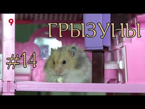 Дай Лапу #14 Все виды грызунов