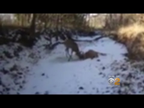 Game Warden Shoots Antlers To Free Bucks
