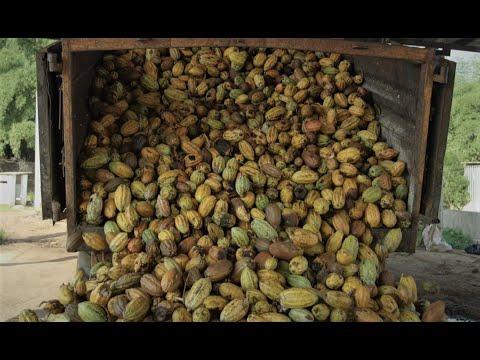Touton - Cocoa Trading