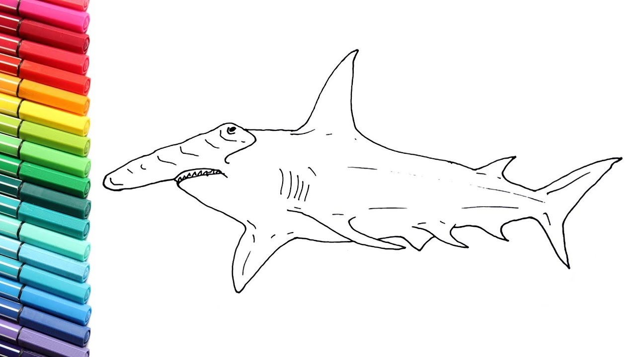 How to Draw Hammerhead Shark - Shark Color Pages For Children - Drawing and  Coloring Shark