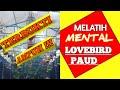 Simulasi Lomba Lovebird Paud Terbaru Sangat Ampuh Melatih Mental Jagoan  Mp3 - Mp4 Download
