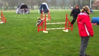 Manny ASCA agility april 2012 Thumbnail