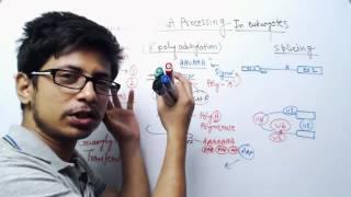 RNA Processing in eukaryotes | RNA splicing, capping and editing