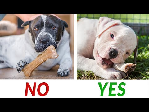 Dog Bones: Which Are Safe For Dogs?