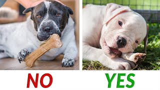 Dog bones: Which are safe for dogs? | Ultimate Pet Nutrition - Dog Health Tips