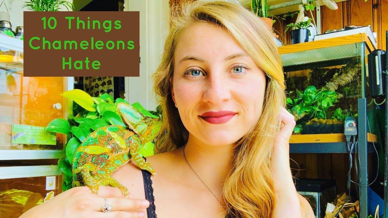 10 Things Chameleons Hate!
