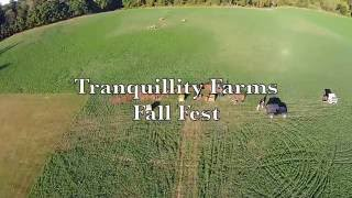 Fall Fest at Tranquillity Farms! Fall 2016
