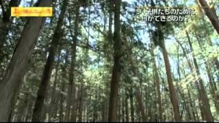 放射線量20ミリシーベルト/よい国のニュース 4/4