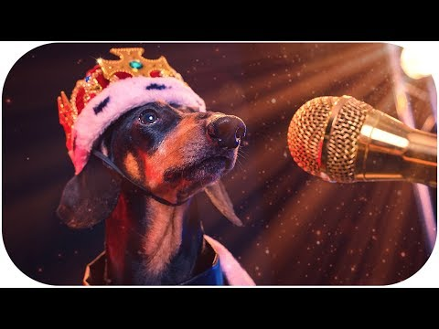 Doxie Din - I'm So Awesome! [Official Music Video]