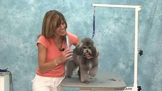 Learn The Puppy Cut Grooming Style from Jodi Murphy