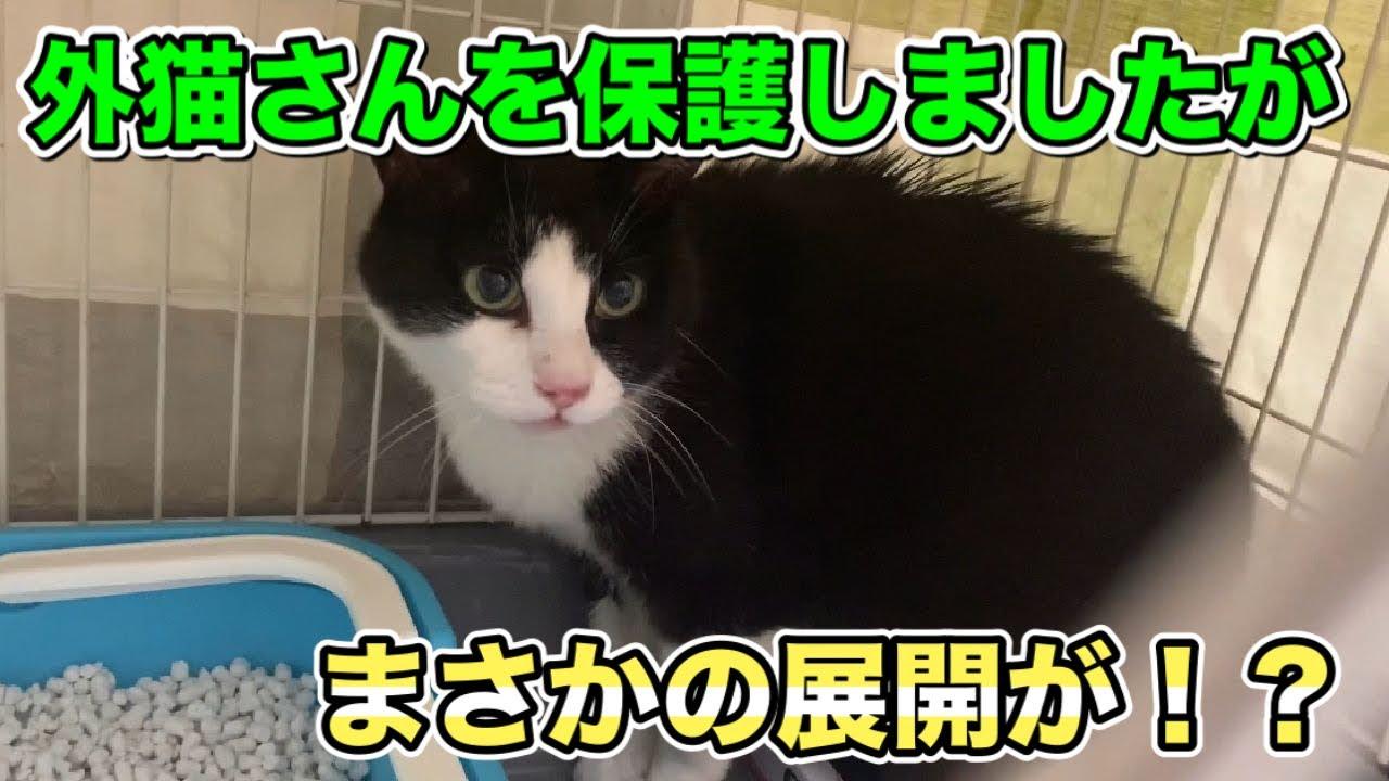 4年以上お外で暮らしていた猫を保護しました【rescued cat】