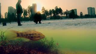 Ловля на блесну. Подводное видео онлайн. Зимняя рыбалка(Ловля ротана в пруду 2016. Подводные съемки. Рыбалка зимой с подводной камерой. Зимняя рыбалка в Подмосковье..., 2016-01-13T17:01:10.000Z)
