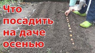 Озимые посадки.  Свекла, морковь, лук-севок, лук-чернушка, салат, укроп, петрушка, кинза