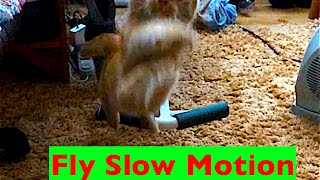 Funny Cat Flying SLOW MOTION