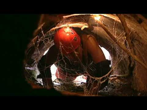 I'm a celeb- Davids Task (Holy Moley) [High Quality]