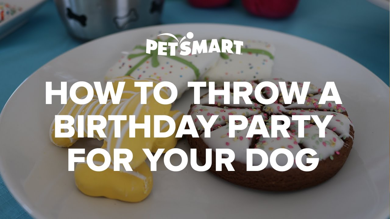 How To Throw A Birthday Party For Your Dog PetSmart