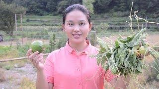 长那么大的南瓜不吃,农村姑娘却吃南瓜叶,为什么呢?