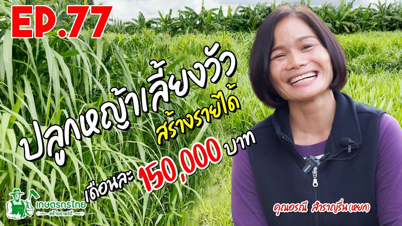 Ep77 ตอน ปลูกหญ้าเลี้ยงวัว สร้างรายได้ เดือนละ 150,000 บาท