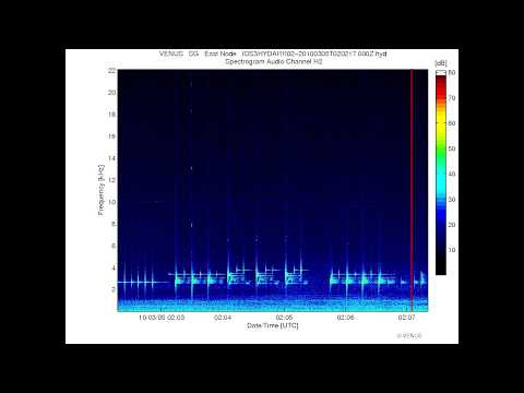 Strange Underwater Audio of Modern Military Sonar pings and sweeps - Submarine/ Destroyer