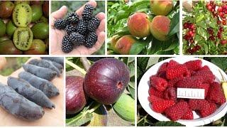 видео плодовые деревья  (Сад) / Поиск по тегам / Страница 5 / Мои дачи
