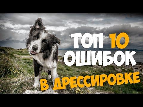 ТОП 10 ОШИБОК в дрессировке собаки!!!