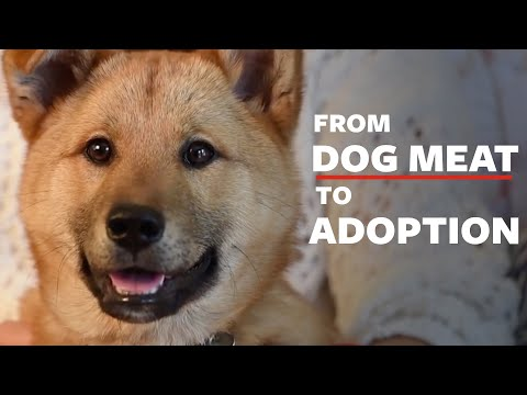 Dog Meat Dog Adopted by Korean Woman