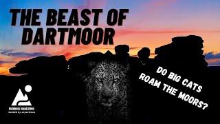 The Beast of Dartmoor - Big Cats in Britain?