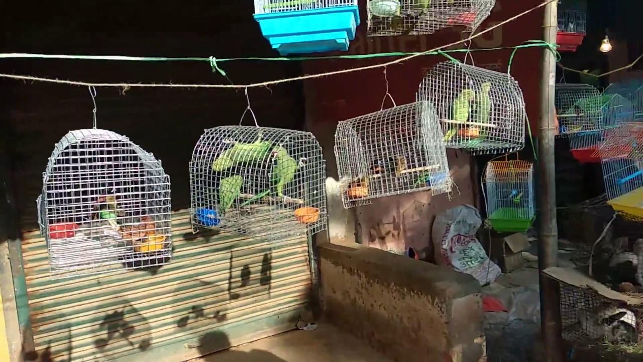 Pet animal shop in Murma Mela Ranchi jharkhand 2018