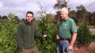 Choosing Trees for a Hedge