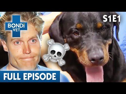 🐶 Dog Can't Run Properly | S01E01 | Bondi Vet