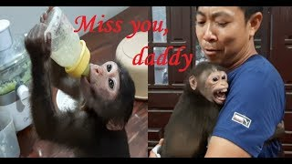 Monkey Doo Loves Cucumber Juice | Doo Misses Daddy