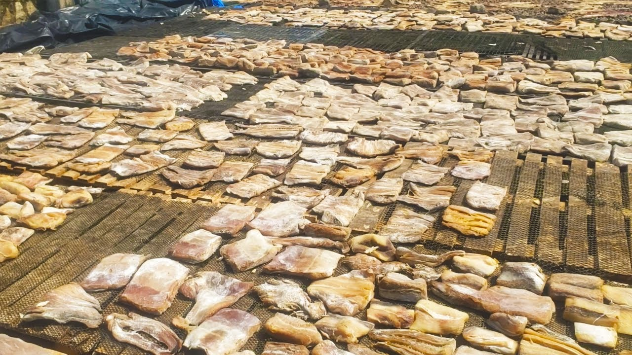 Inside A Dry Fish Making Facility | Dry Fish Making Sri Lanka