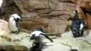 Penguin Suicide