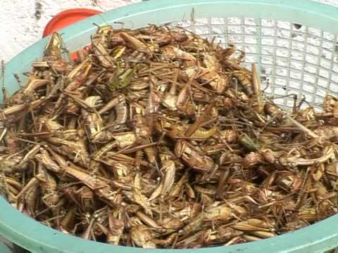 Cockroaches and worms 'a la carte' in Thailand