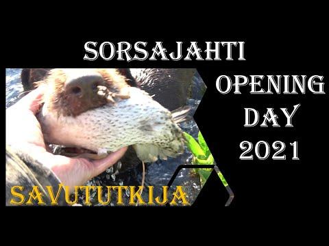 Sorsajahdin aloituspäivä 2021 – duck hunting opening day