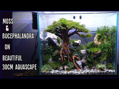 design-#01-|-tutorial-setting-aquascape-30cm-tema-pohon-(bersama-mjb-aquatic)