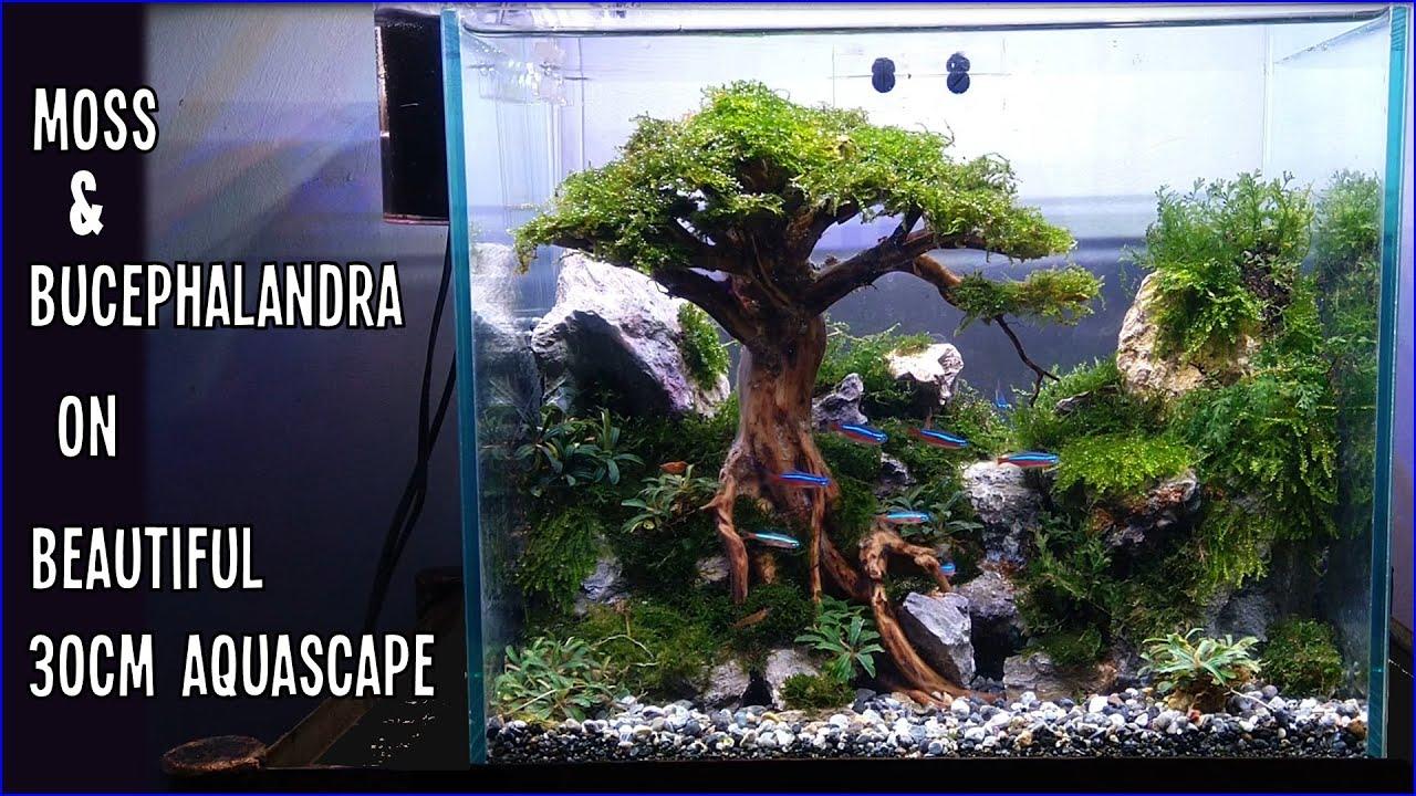 Design 01 Tutorial Setting Aquascape 30cm Tema Pohon Bersama Mjb Aquatic Youtube