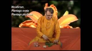 Аюрведа: Сат Исабгол и кишечник (Роберт Грислис) 10 урок