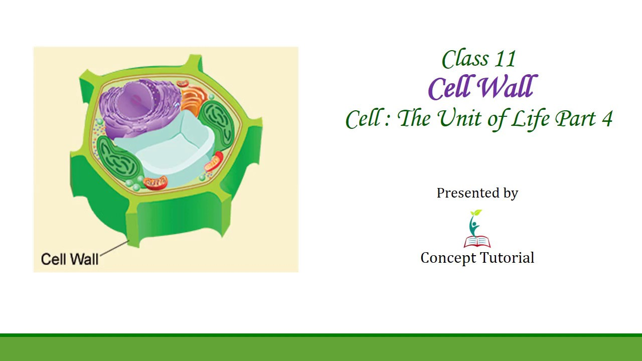 Cell Wall | Cell The Unit of Life (Part 4) | Biology Class ...