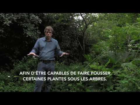 La forêt-jardin de Martin Crawford en français !