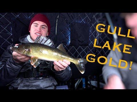 Gull Lake GOLD (Walleyes)